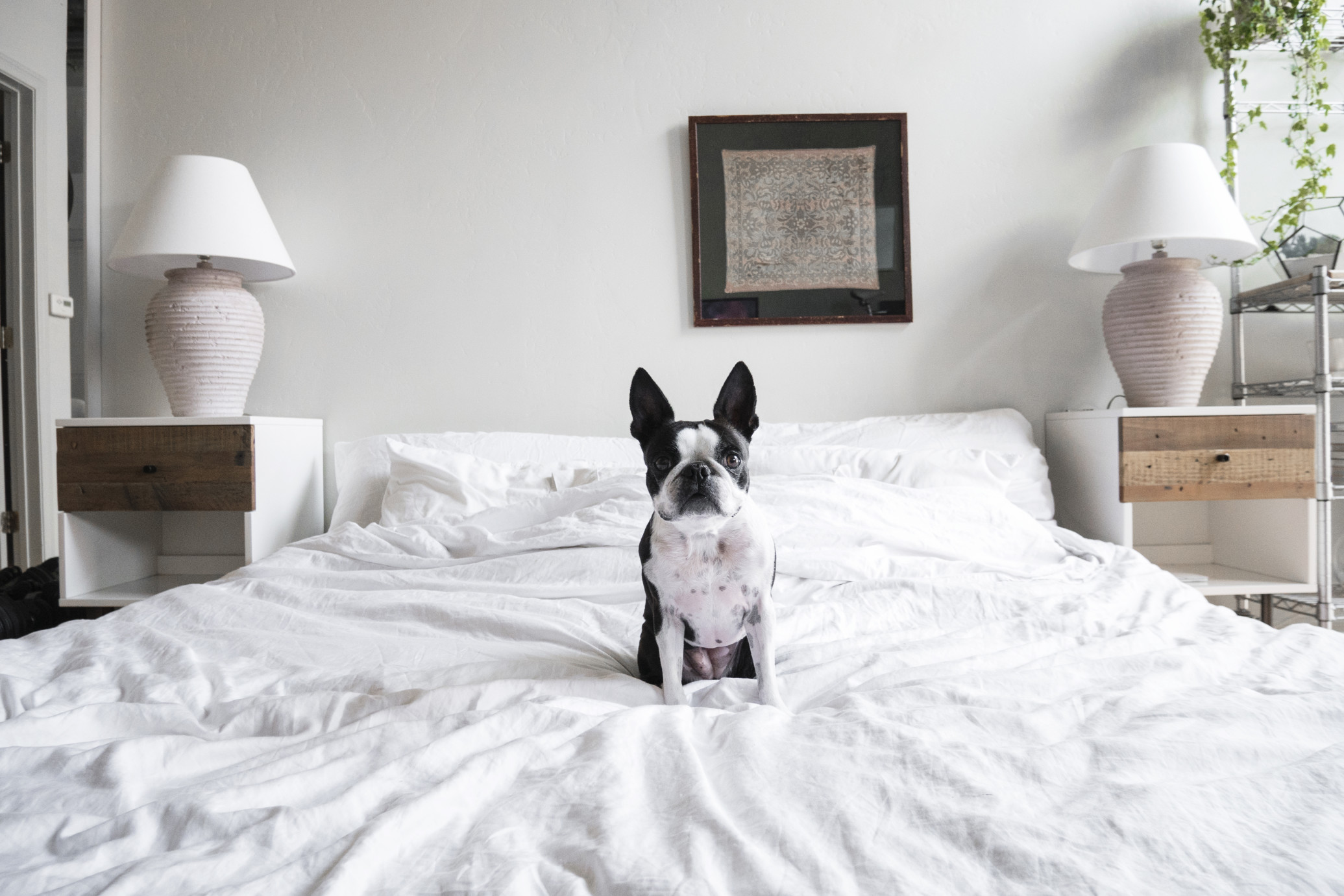cute dog sitting on bed t aBeVP